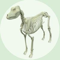 Fortbildung Anatomie