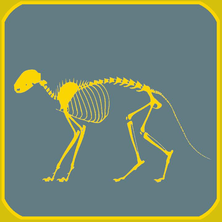Tierphysiotherapie