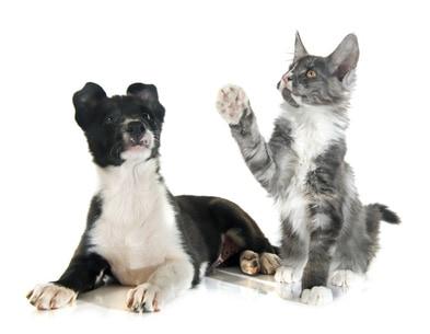 Hund & Katze Webinare