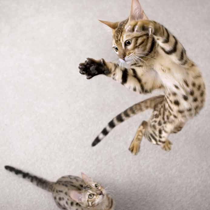 Katzen Webinar