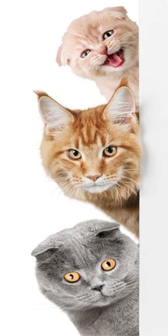 Kontaktformular Katzen