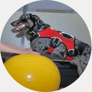 Ausbildung Tierphysiotherapeut/in